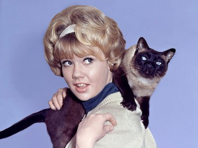 That Darn Cat