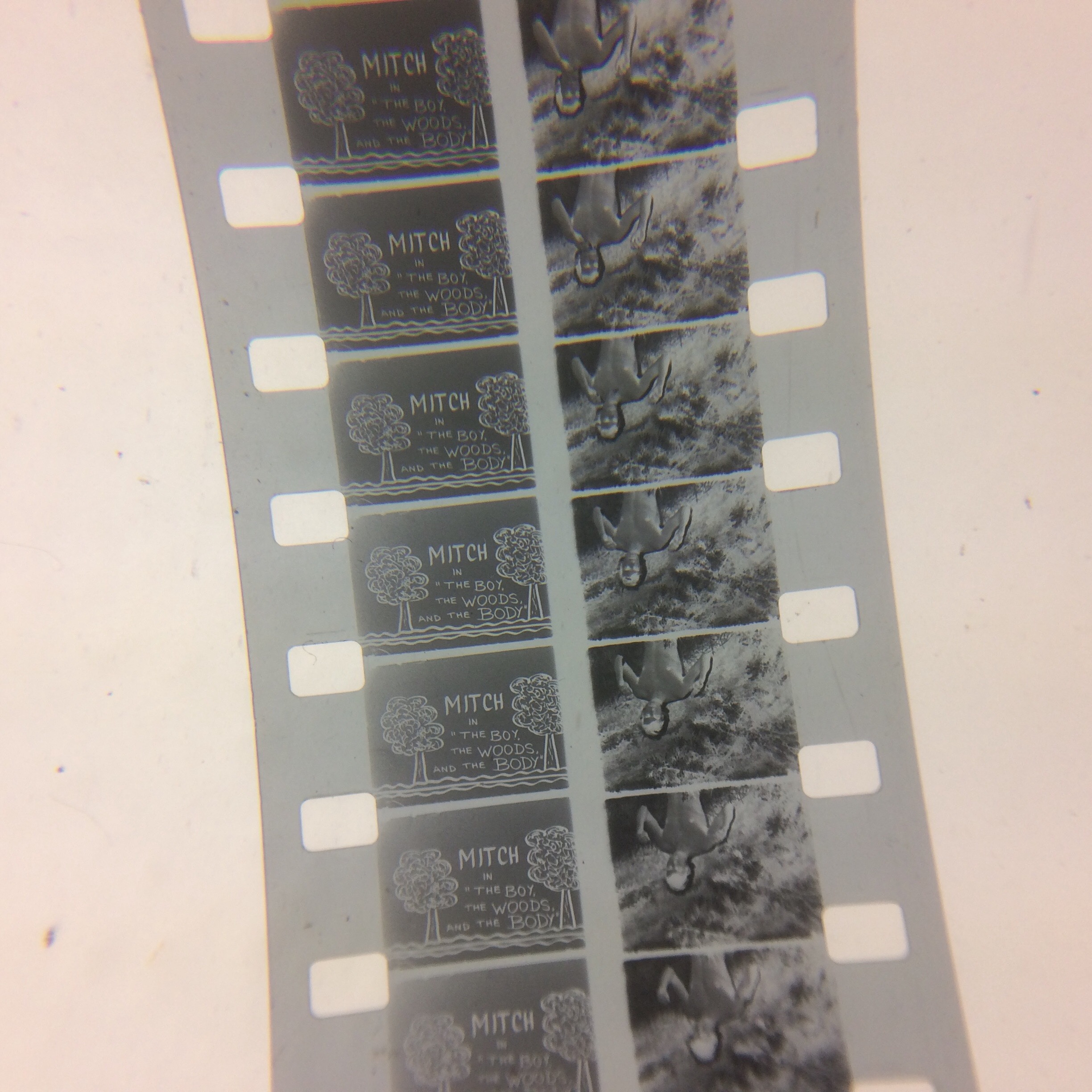 Processing the Pat Rocco Collection | UCLA Film & Television
